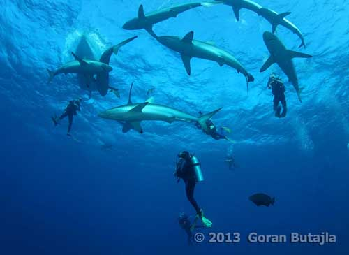 Scuba Diving Areas For American Travelers With Easy Access To Attractive Locations In The Cayman Islands Belize Mexican Coast And Honduras