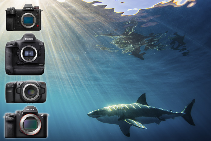 top underwater video cameras