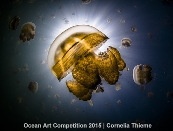 HM – Cornelia Thieme