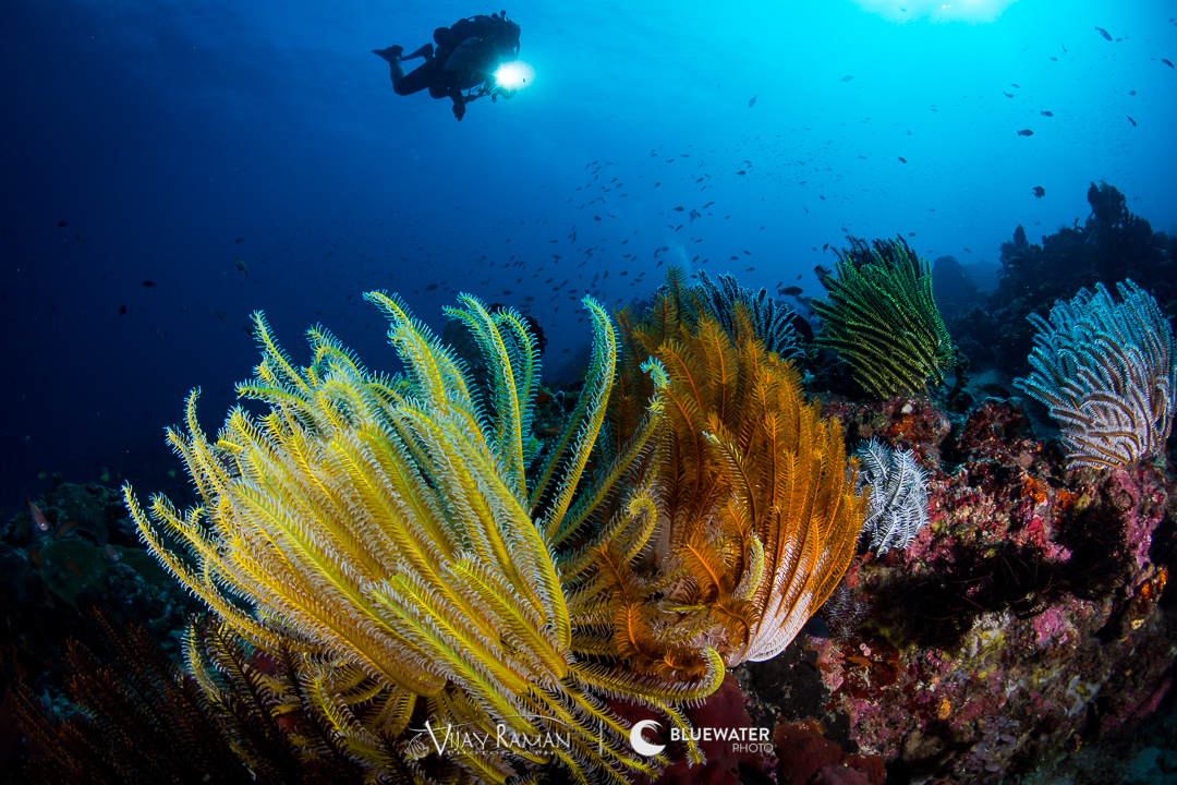 photo essay underwater photography guide amazing underwater photography from anilao taken in 2017