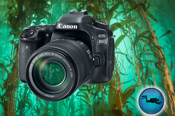 Canon 80D Review for Underwater Photo & Video - Underwater