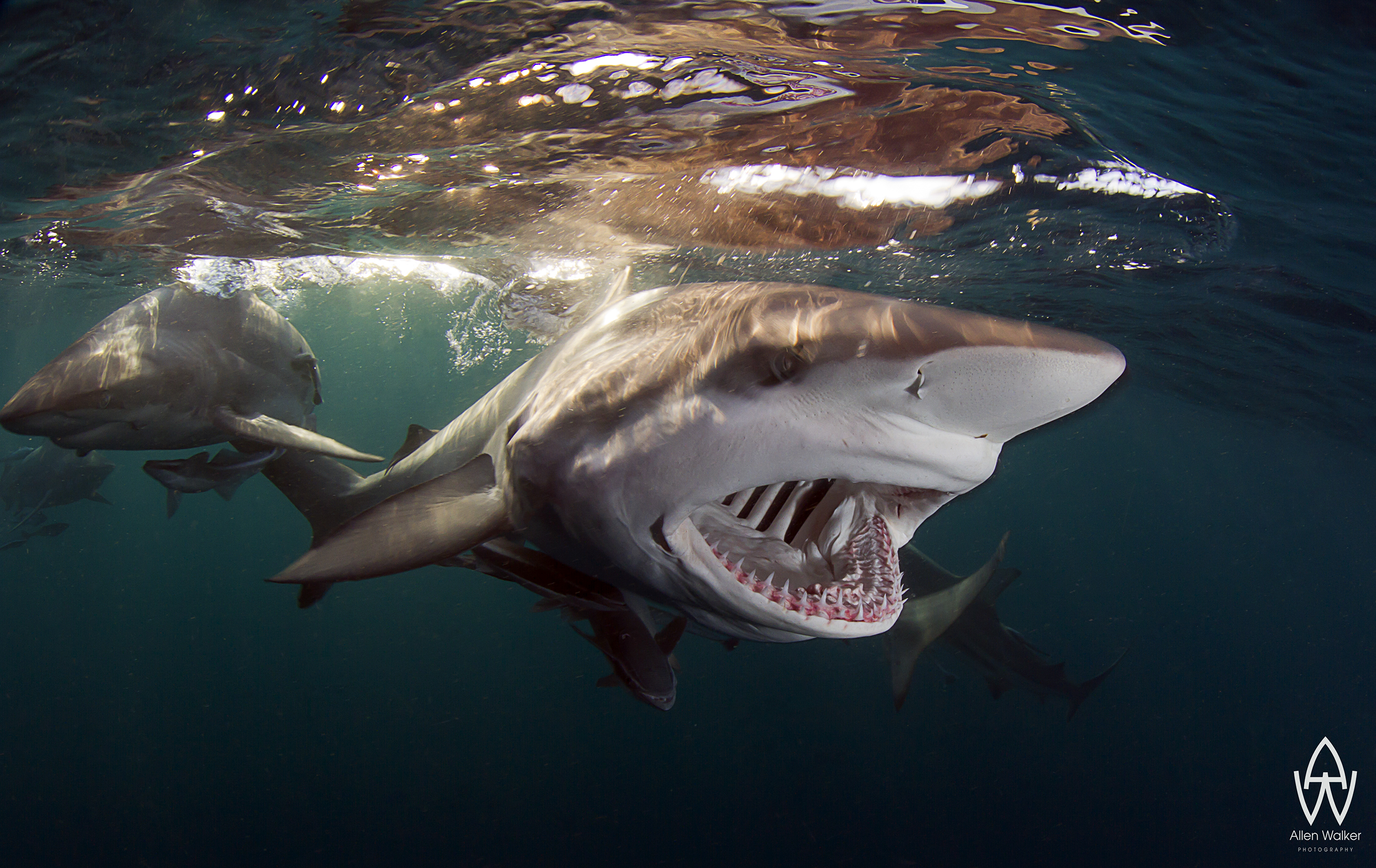 "5d Mk Iii >> Story Behind the Shot: ""Shout""