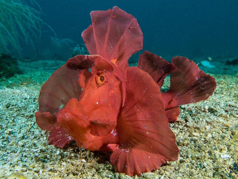 Constant Lighting Photo Tutorials - Underwater Photography Guide