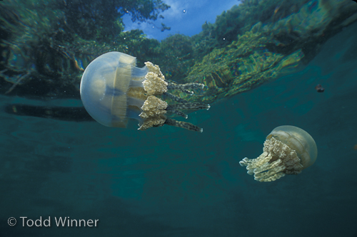 Palau Diving Underwater Photography Guide