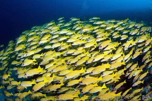 the maldive shark essay