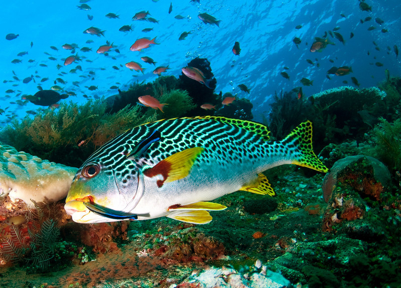 Marine Life|Underwater Photography Guide