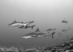 Photo Tips for Adventure Diving and Expeditions - Underwater