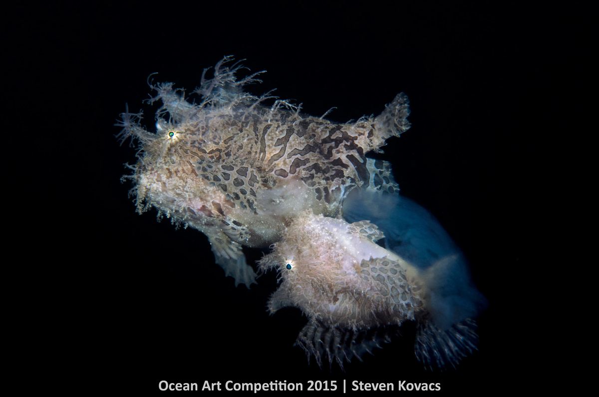 ocean art contest winners underwater photography guide egg release