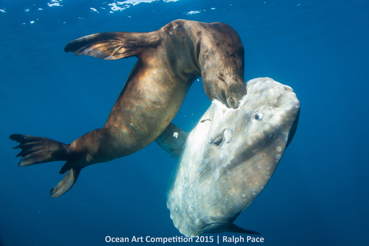 ocean art contest winners underwater photography guide battle on the nine