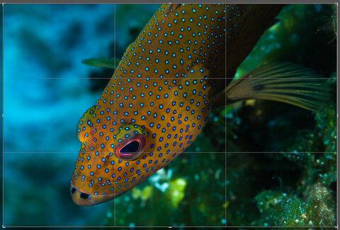Lightroom Tips & Tricks: Crop Image Overlay Tool