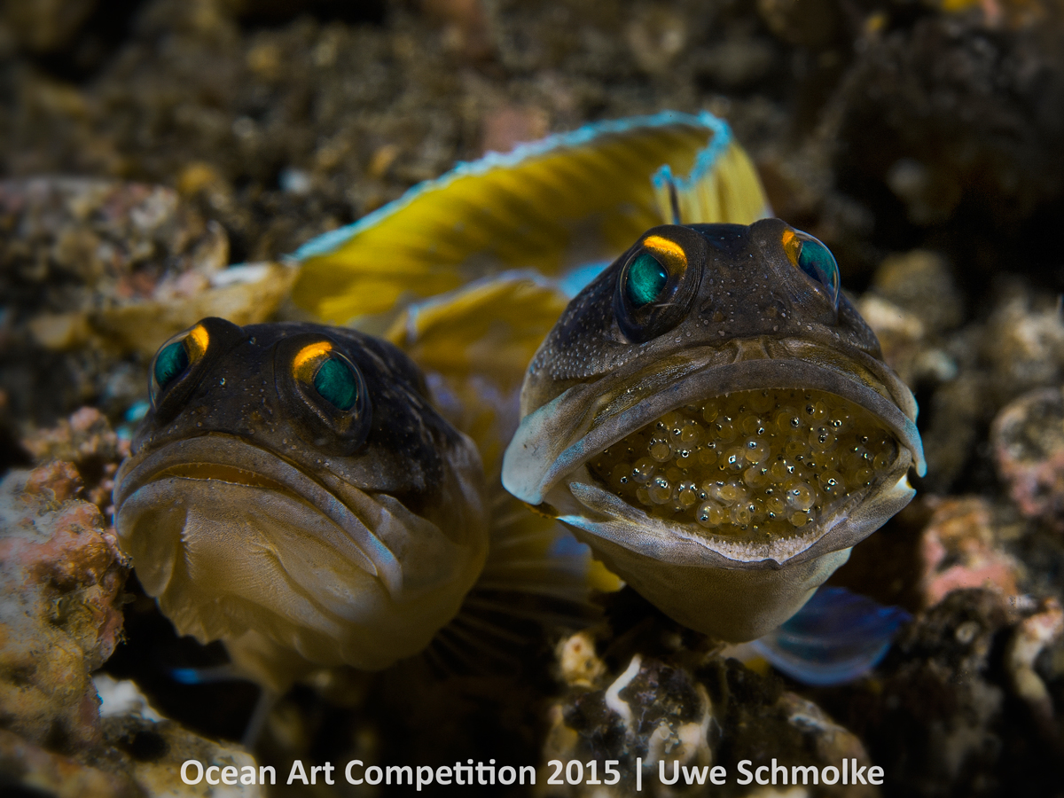 ocean art contest winners underwater photography guide jawfish couple next generation