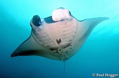 the underwater world essay