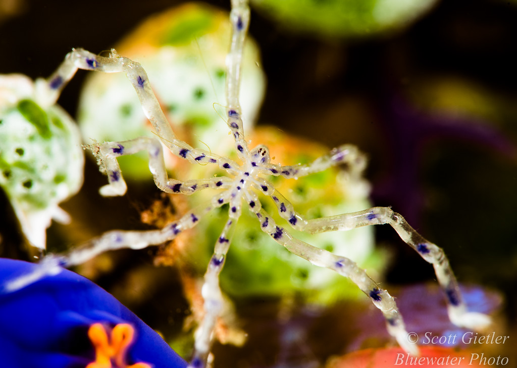 Nauticam Super Macro Converter review
