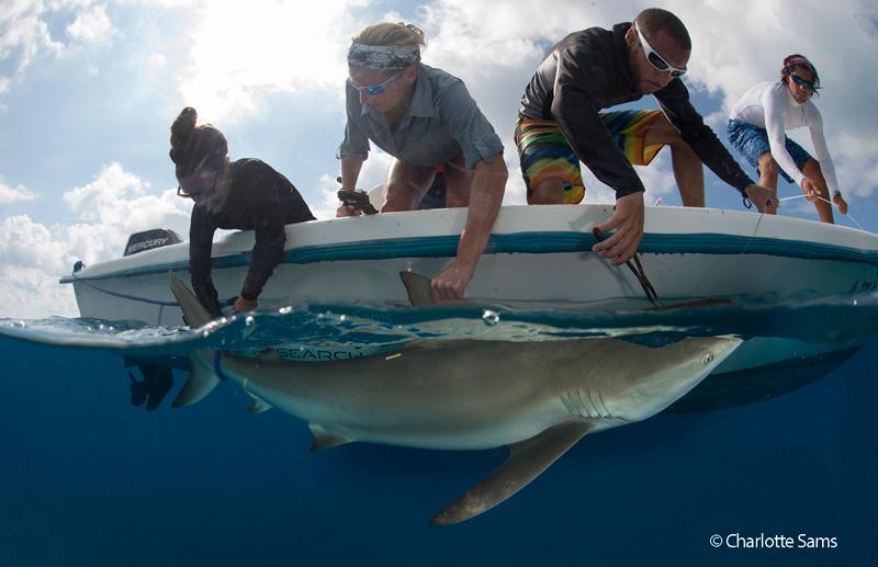 Fotka Uživatele Bimini Biological Field Station Sharklab