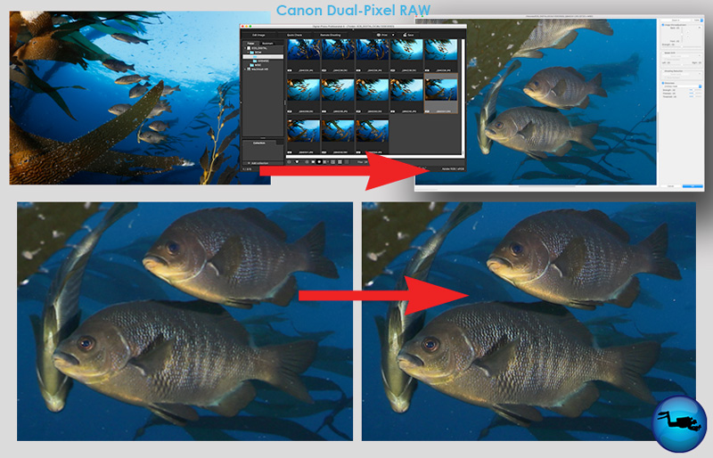 Canon 5D Mark IV Review - Underwater Photography Guide
