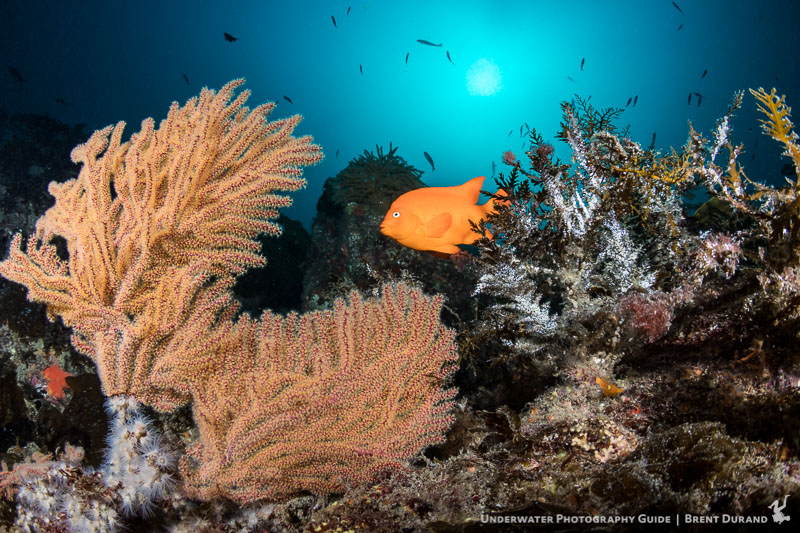 Canon 5d Mark Iv Review Underwater Photography Guide