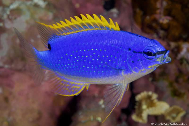 Show me pictures of colorful fish for Show me pictures of fish