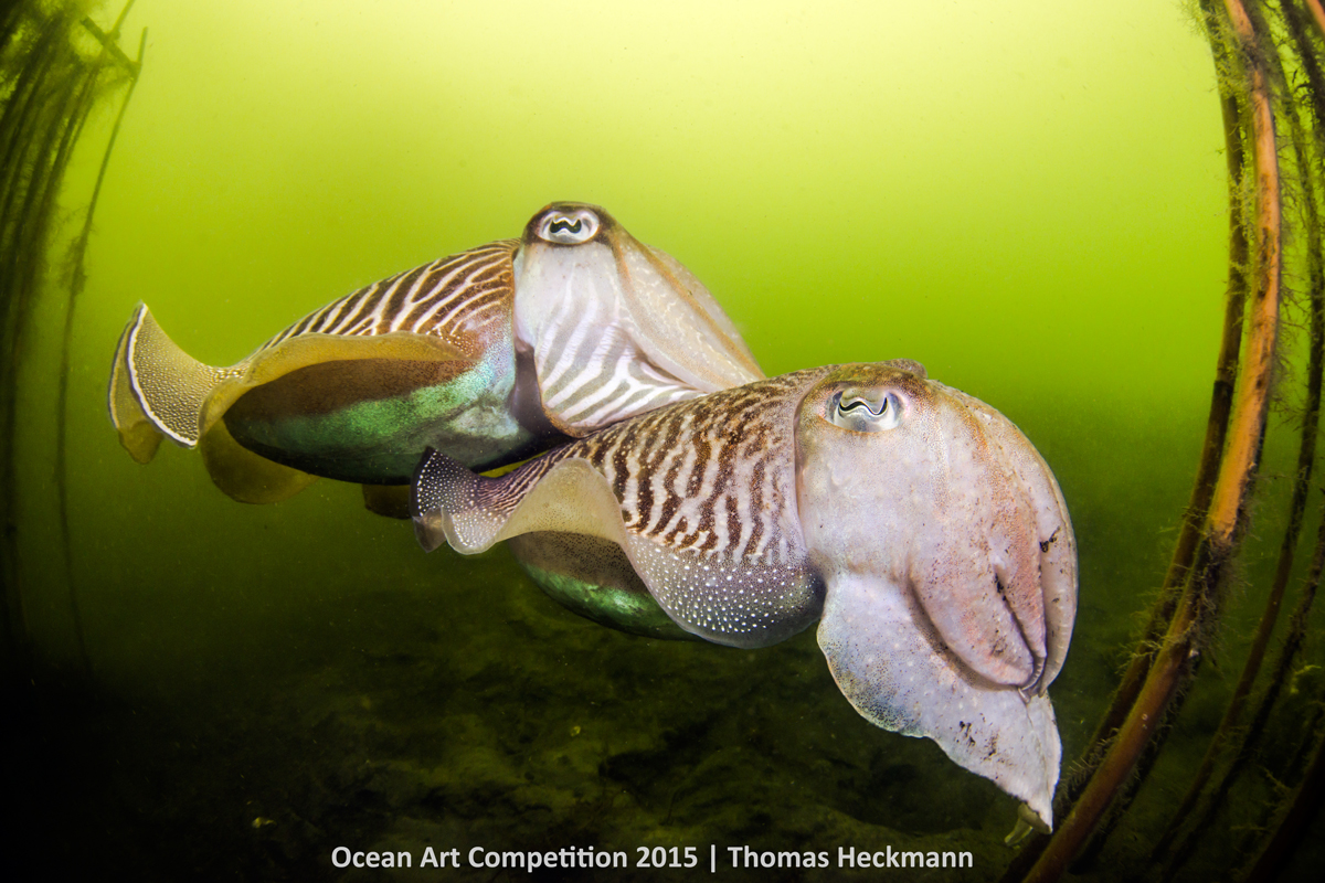 ocean art contest winners underwater photography guide wedding dance of the north sea elves
