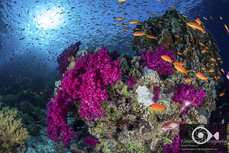 photo essay underwater photography guide sha ab abu nahas reef is famous for hosting several shipwrecks the reef lies just north of hurgada perhaps the reef s most famous wreck is the giannis d